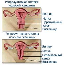 prilivi-seksualnogo-zhelaniya-vo-vremya-menstrualnogo-tsikla